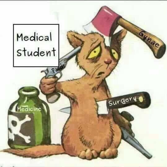 medical student dating dental student